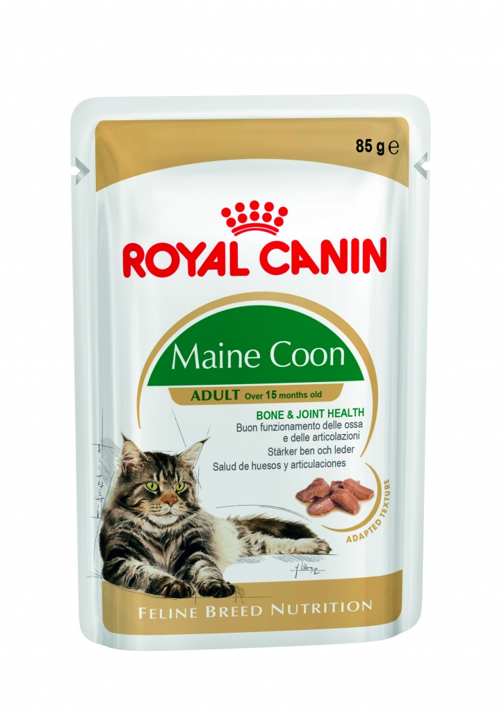 royal canin maine coon adult 31 dla doros ych kot w rasy maine coon suche bytowe karmy dla. Black Bedroom Furniture Sets. Home Design Ideas