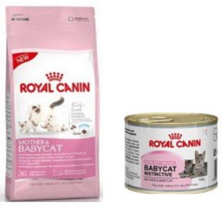 Royal Canin Mother Amp Babycat Karma Dla Kotek W Ciąży I